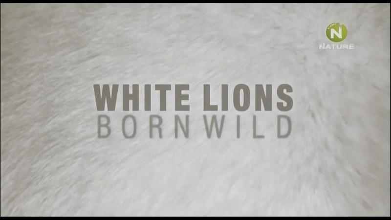 Дикие белые львицы 2 серия Борьба за выживание White Lions Born Wild 2012