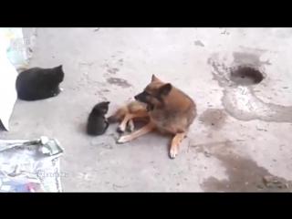 Кошка знакомит котят со своим старым другом