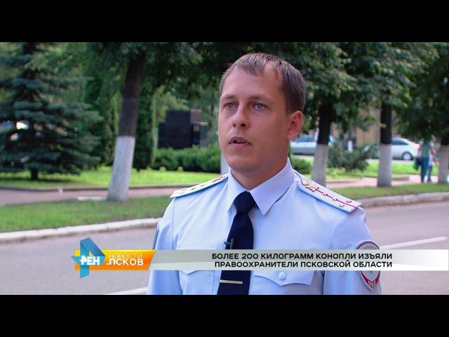 РЕН Новости Псков 09 08 2017 Более 200 килорамм конопли изьяли правоохранители Псковской области