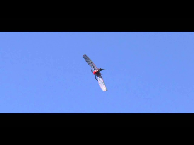 Rocsky Technology s RC Pterodactyl sold by HobbyKing