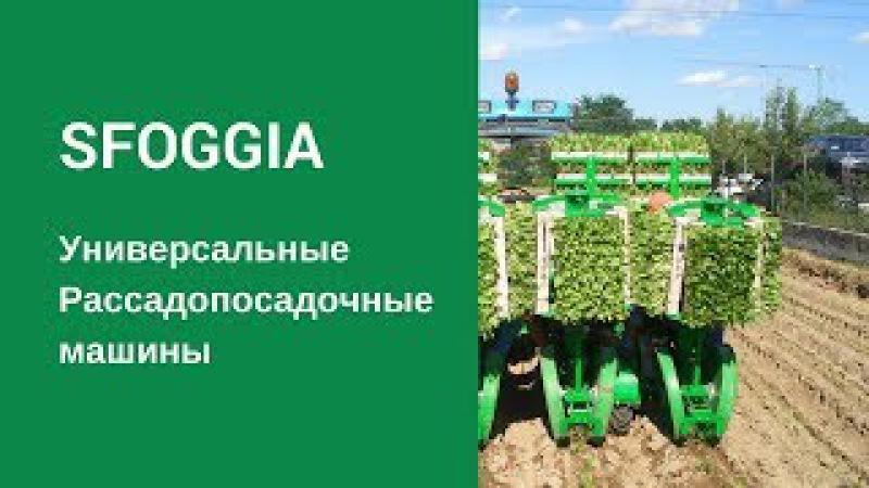 Рассадопосадочные машины SFOGGIA Оборудование для посадки рассады Сеялка овощная