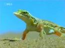 Дикая природа Африка Пустыня Намиб lbrfz ghbhjlf fahbrf gecnsyz yfvb