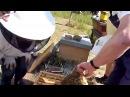 BD Varroa zählen, Ameisensäure- oder Milchsäure-Behandlung, Fütterung der Ableger - 25.7.2015
