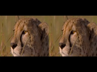African cats Nature documentary film by Disneynature ★ Nature Documentary 2017