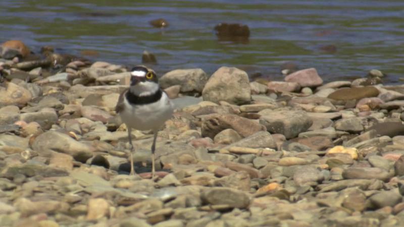 BBC Тайная жизнь птиц Создание гнезда 2010 BDRip 720p