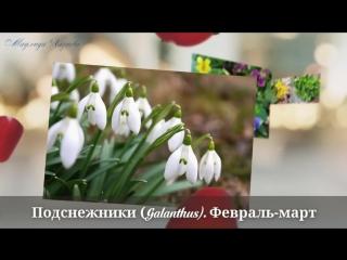 samie-pervie-vesennie-cveti-ocen-krasivoe-video-the-earliest-spring-fl_()
