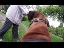 ГоПро и Родезийский Риджбек - Мир глазами собаки / GoPro and Rhodesian Ridgeback - Go pro dog