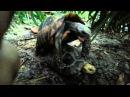 Секс черепах Супер прикол Funny Sex turtles