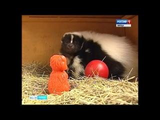 Обитатели липецкого зоопарка осваивают новую партию игрушек