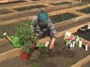 Посадка рассады томатов. Что нужно для выращивания крупного урожая помидор