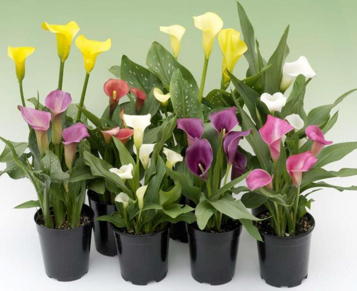 Удобрения для домашних цветов, изображение №4