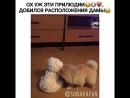 пес щенок шпиц доберман чихуахуа долматинец... Москва 09.10.2017