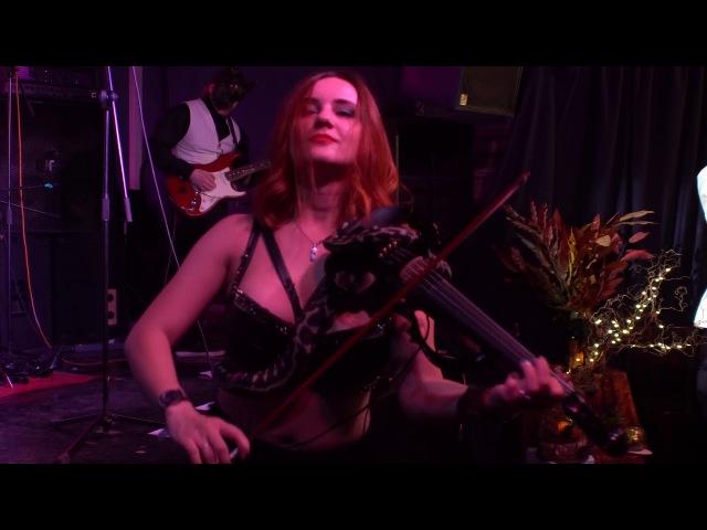 Live Felidae After Dark violin cover Tito Tarantula