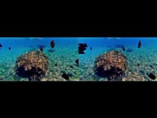 Риф в акабе 3d stereoscopic