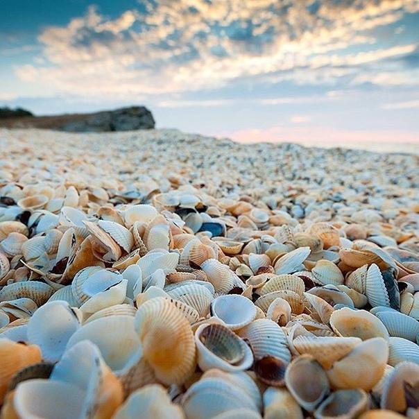собраны черное море ракушечный пляж фото такие
