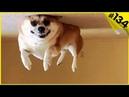 Смешные видео про животных - приколы с собаками 2019 До слёз 6 минут