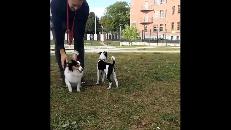ПОМОГАЙ | Друзья! Если вы любите собак так же, как люблю я, поделитесь пожалуйста моим постом🙏 . Сегодня я нашла возле дороги ще