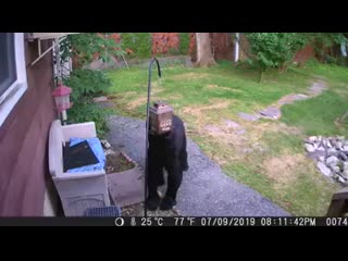 Fearless dog chases black bear from neighbor's yard (360p).mp4