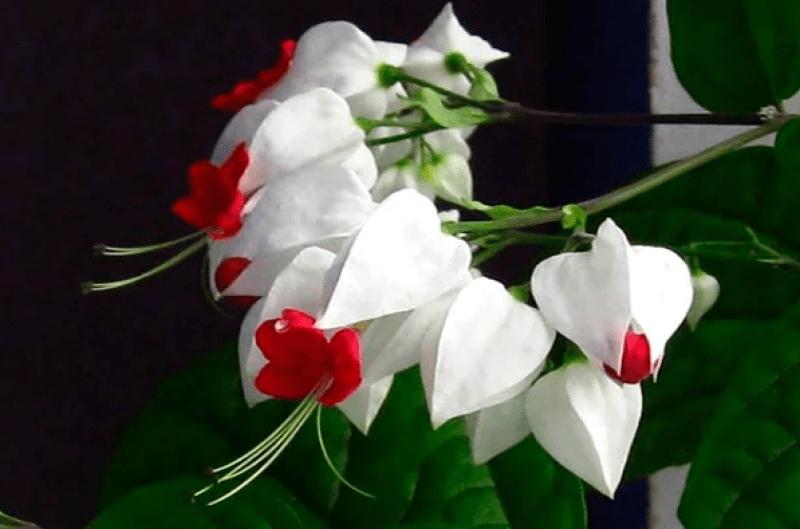 Красивейший комнатный цветок, который цветет почти круглый год, изображение №2