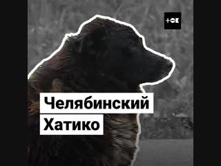 Челябинский Хатико. Пес прождал погибшего в ДТП хозяина два года