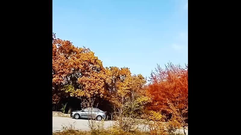 Лес возле Орлинного