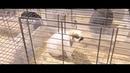 Контактных зоопарков в Уфе становится все больше