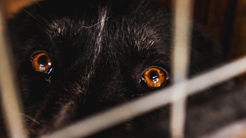 Sled Dogs. Ответы на вопросы. Щенок самоеда помета Э. Тренировка Фанты и Зевса