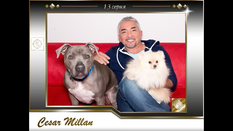 13 серия Сезар Миллан Переводчик с собачьего /Sunshine Teddy