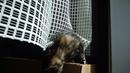Котята в добрые ручки. 89098861930