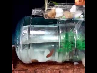Домашний аквариум - фантазия и руки -