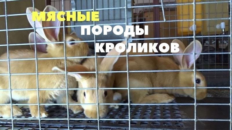 Бургундские, калифорнийские и шиншилловые кролики в хозяйстве Моряк/ЕвроКрол