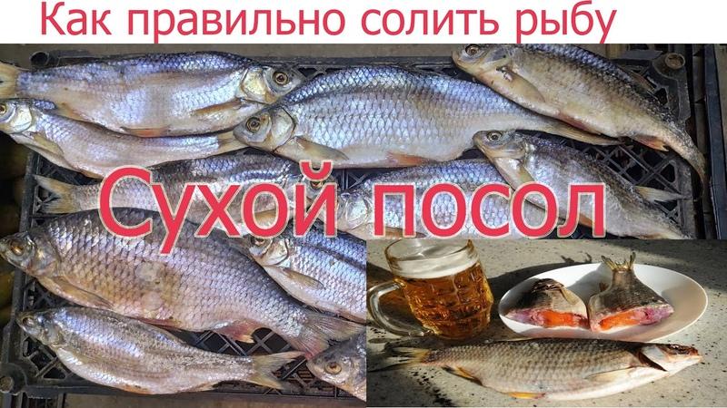 Как правильно и вкусно солить рыбу СУХИМ ПОСОЛОМ Уникальный рецепт вяленой тарани по простому