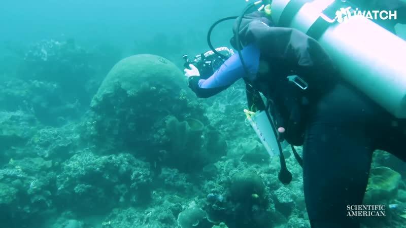 Алгоритм, убирающий воду с подводных фото [ЖЮ-перевод]