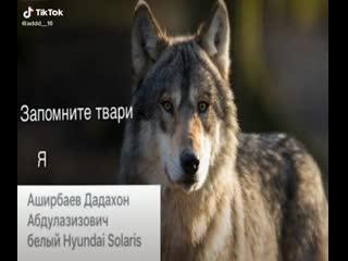 Запомните твари я Аширбаев Дадахон Абдулазизович белый Hyundai Solaris цитаты волка волк в цирке не выступает ауф auf безумно