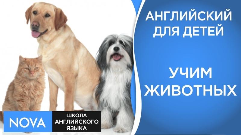 Английский язык для детей Учим животных Названия животных на английском. Школа NOVA