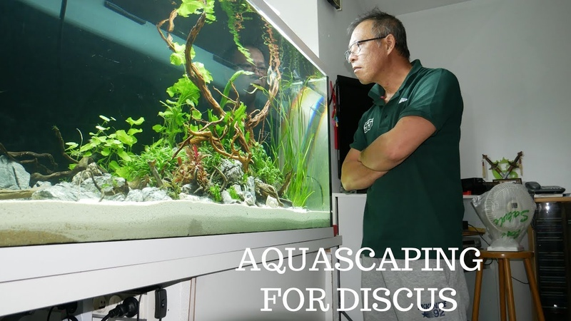 AQUASCAPING FOR DISCUS 224 GALLON VIDEO 4K