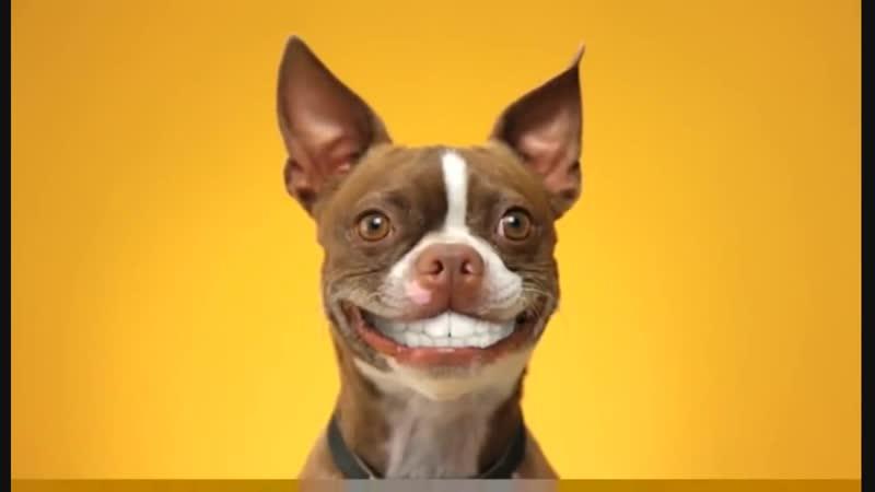Doggy Dentures PEDIGREE® DENTASTIX® Commercial