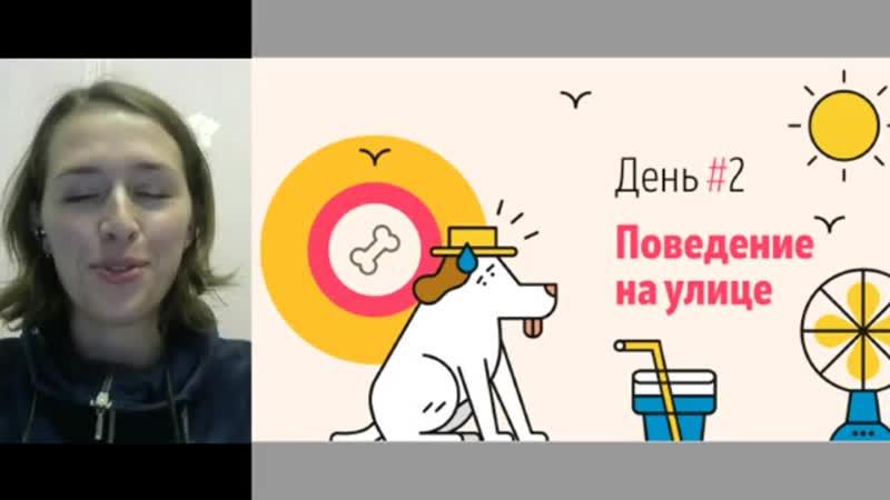 Тренировка собак 2