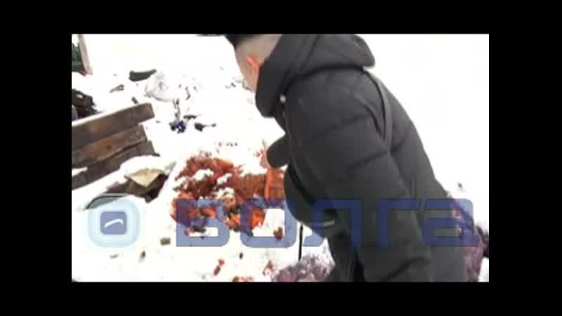 Конюшню с истощенными животными обнаружили волонтеры под Дзержинском