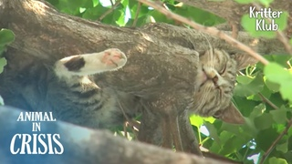 Starving Cat Stranded On A High Tree Begs For Food, But At Last..   Animal in Crisis EP229