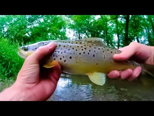 Trout Fishing with a Rapala Countdown