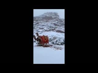 Верблюды, вы зачем нашу зиму украли