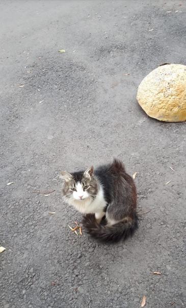 Красивый котик Стасик ищет родителей! ❤❤❤  3 года, ласков