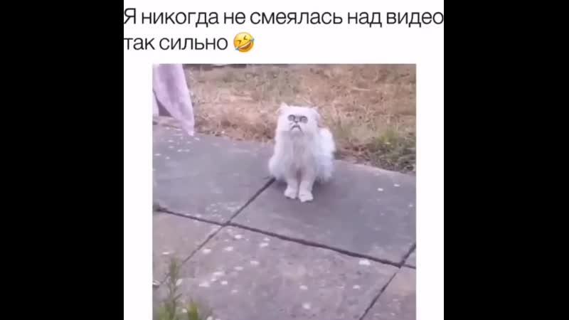 Какой то кот странный (720p).mp4
