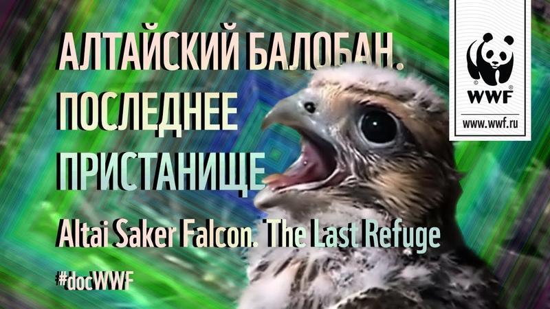 Алтайский балобан Последнее пристанище