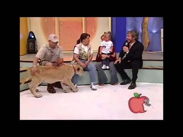 Leão ataca criança em programa de TV no México