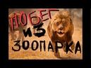 Побег из Зоопарка Современные Российские реалии