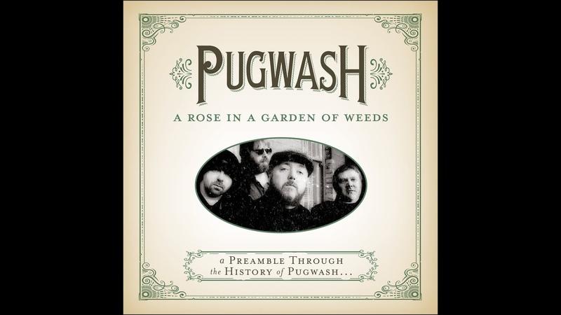 Pugwash A Rose In A Garden Of Weeds