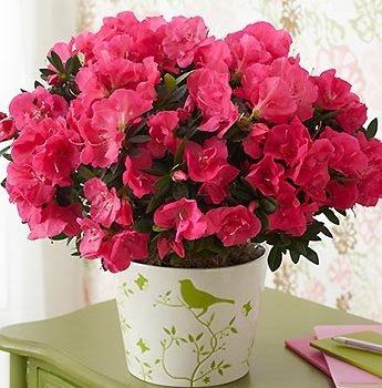ПОЛЕЗНОЕ УДОБРЕНИЕ ДЛЯ ЦВЕТОВ Если Вы хотите, чтобы комнатные цветы обильно цвели и имели приятный шлейфовый запах, то удобряйте их время от времени глюкозой и витамином В1. Используйте 5 мл