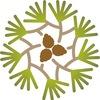 Сосновый Бор  | Эко-здравница
